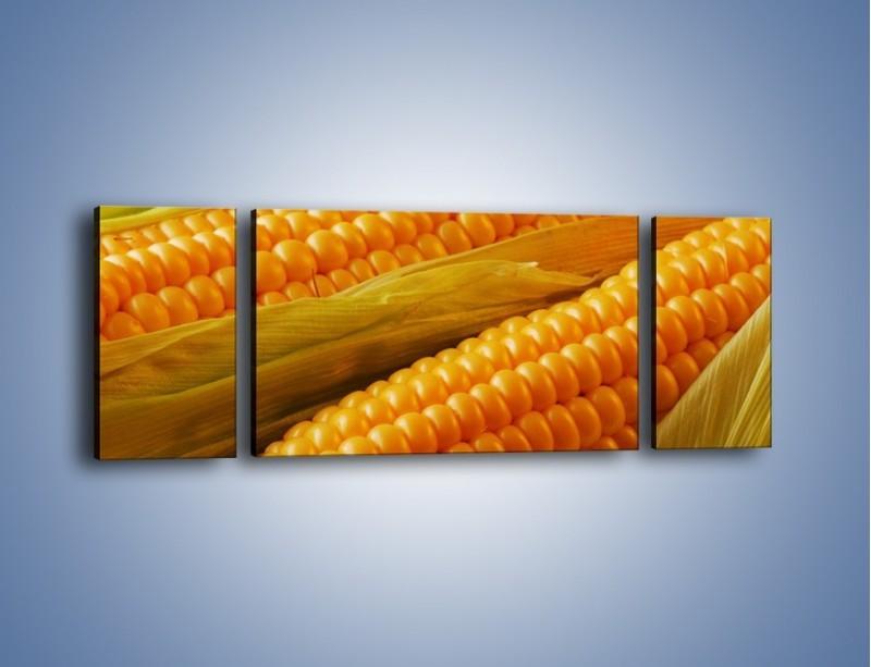 Obraz na płótnie – Kolby dojrzałych kukurydz – trzyczęściowy JN046W5