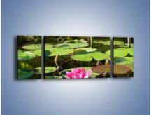Obraz na płótnie – Ciemno-różowy nenufar na wodzie – trzyczęściowy K014W5