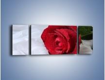 Obraz na płótnie – Bordowa róża na białej pościeli – trzyczęściowy K1023W5