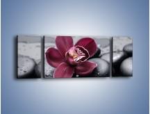 Obraz na płótnie – Bordowy storczyk i ciemne towarzystwo – trzyczęściowy K156W5