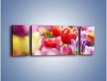 Obraz na płótnie – Boso przez tulipany – trzyczęściowy K344W5