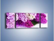Obraz na płótnie – Bez w różnych kolorach – trzyczęściowy K389W5