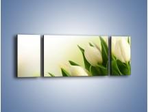 Obraz na płótnie – Białe tulipany na zgodę – trzyczęściowy K400W5