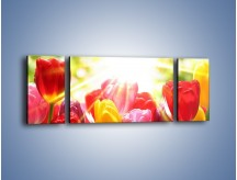Obraz na płótnie – Bajecznie słoneczne tulipany – trzyczęściowy K428W5