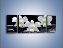 Obraz na płótnie – Biel w kwiecie nocą – trzyczęściowy K512W5