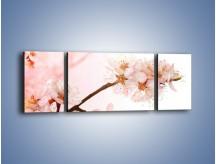 Obraz na płótnie – Blask kwiatów jabłoni – trzyczęściowy K569W5