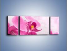 Obraz na płótnie – Ciemny róż w storczyku – trzyczęściowy K588W5