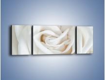 Obraz na płótnie – Biel róży za dnia – trzyczęściowy K709W5
