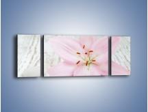 Obraz na płótnie – Cała słodycz w lilii – trzyczęściowy K727W5