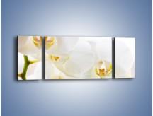 Obraz na płótnie – Białe storczyki blisko siebie – trzyczęściowy K811W5