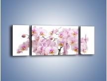 Obraz na płótnie – Cieniutkie gałązki storczyków – trzyczęściowy K813W5
