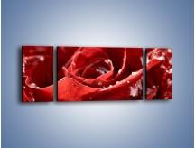 Obraz na płótnie – Chłód w różanych płatkach – trzyczęściowy K932W5