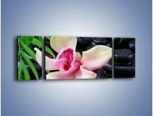 Obraz na płótnie – Cudny kwiat na pierwszym planie – trzyczęściowy K951W5