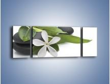 Obraz na płótnie – Artystyczna kompozycja z kwiatem – trzyczęściowy K968W5