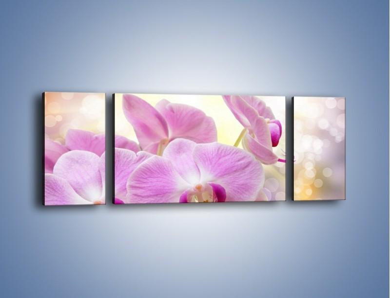 Obraz na płótnie – Lila kwiaty o poranku – trzyczęściowy K976W5