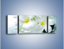 Obraz na płótnie – Białe kwiaty w potoku – trzyczęściowy K991W5
