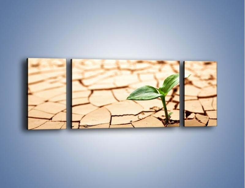 Obraz na płótnie – Łodyga w spękanej ziemi – trzyczęściowy KN013W5