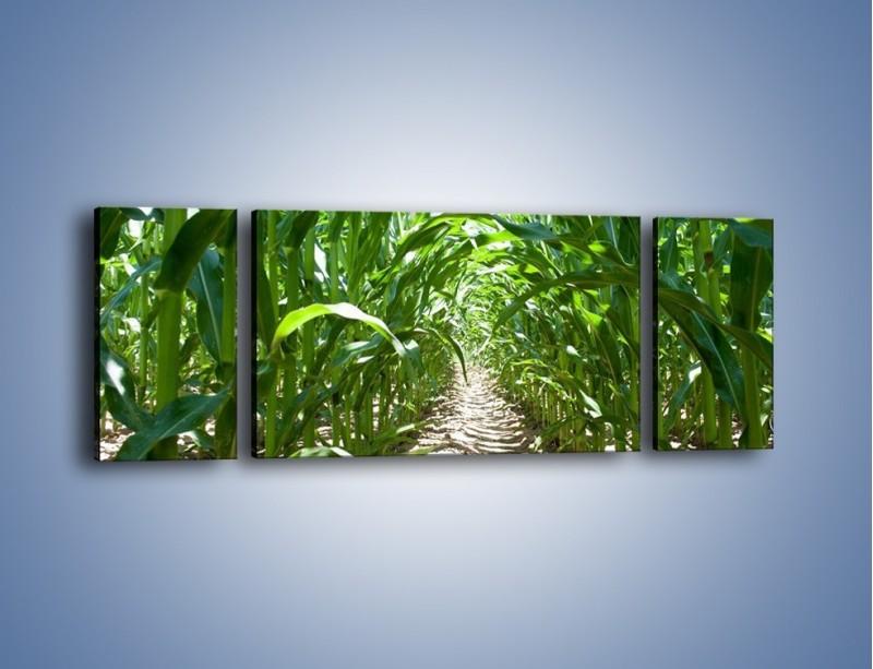 Obraz na płótnie – Labirynt z łodyg – trzyczęściowy KN036W5