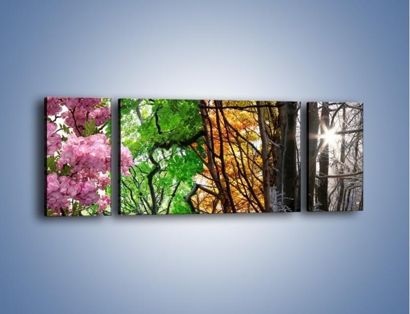 Obraz na płótnie – Drzewa w różnych kolorach – trzyczęściowy KN037W5