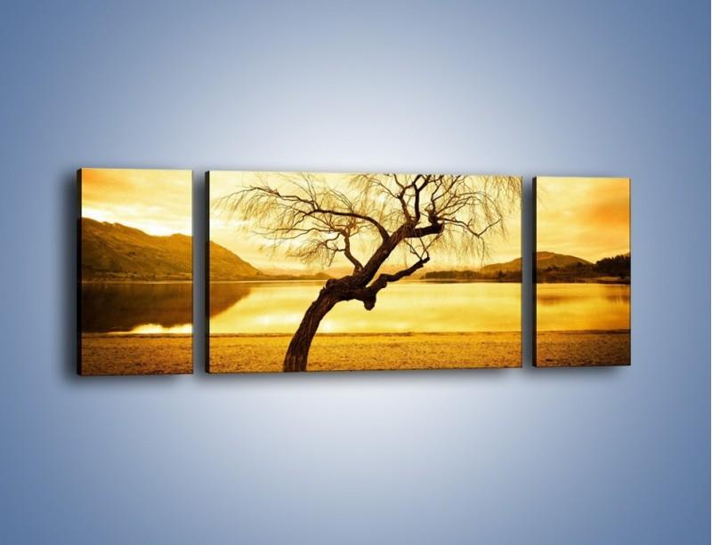 Obraz na płótnie – Pochylone drzewo w sepii – trzyczęściowy KN1033W5