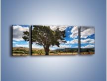 Obraz na płótnie – Cień pod rozłożystym drzewem – trzyczęściowy KN1037W5