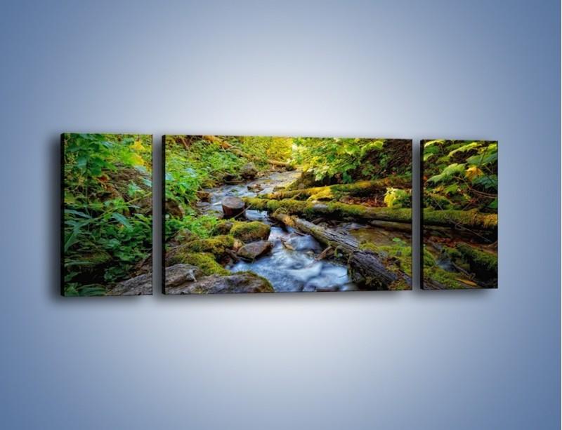 Obraz na płótnie – Drewno ścięte do wody – trzyczęściowy KN1059W5