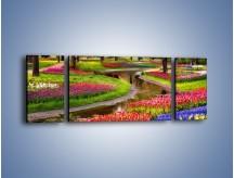 Obraz na płótnie – Aleje kolorowych tulipanów – trzyczęściowy KN1079W5