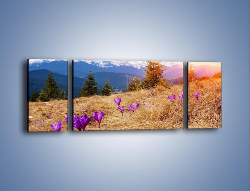 Obraz na płótnie – Przebiśniegi w górach – trzyczęściowy KN1126AW5