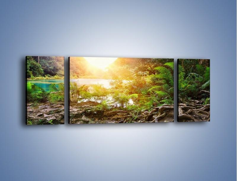 Obraz na płótnie – Konary wśród paproci – trzyczęściowy KN1141AW5