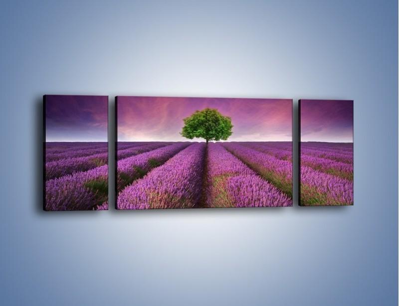 Obraz na płótnie – Droga lawendową do drzewa – trzyczęściowy KN1158AW5