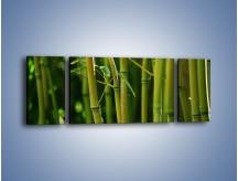 Obraz na płótnie – Bambusowe łodygi z bliska – trzyczęściowy KN118W5