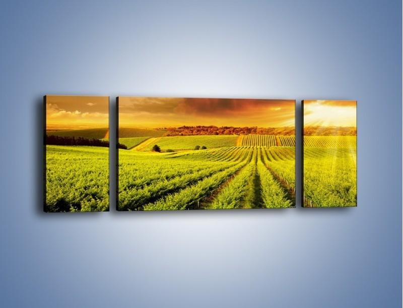 Obraz na płótnie – Plantacja w stronę słońca – trzyczęściowy KN1180AW5