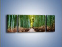 Obraz na płótnie – Bambusowy las – trzyczęściowy KN1187AW5