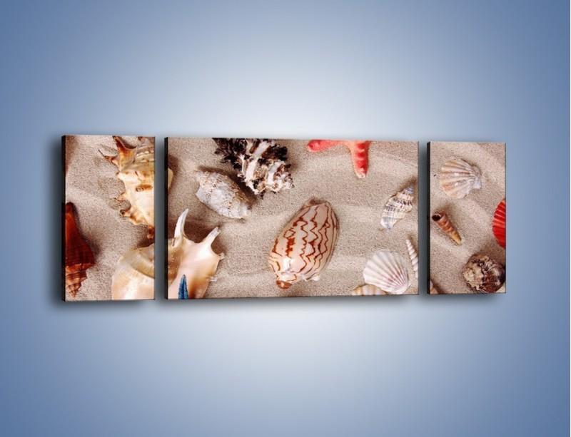 Obraz na płótnie – Kolorowe skorupiaki – trzyczęściowy KN1214AW5