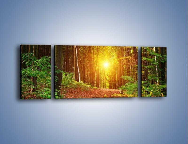 Obraz na płótnie – Polski krajobraz leśny – trzyczęściowy KN1257AW5
