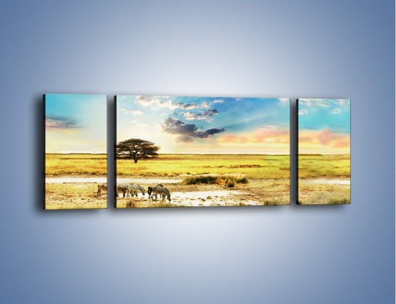 Obraz na płótnie – Zebry na sawannie – trzyczęściowy KN1298AW5
