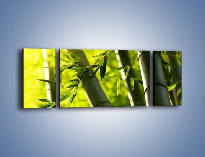 Obraz na płótnie – Twarde łodygi bambusa – trzyczęściowy KN1314AW5