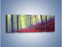 Obraz na płótnie – Bardzo wąską ścieżką leśną – trzyczęściowy KN1335AW5