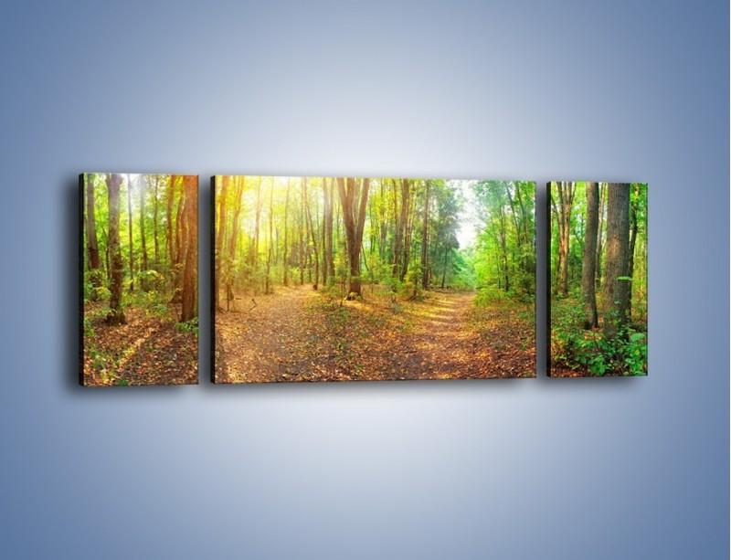 Obraz na płótnie – Przejrzysty piękny las – trzyczęściowy KN1344AW5