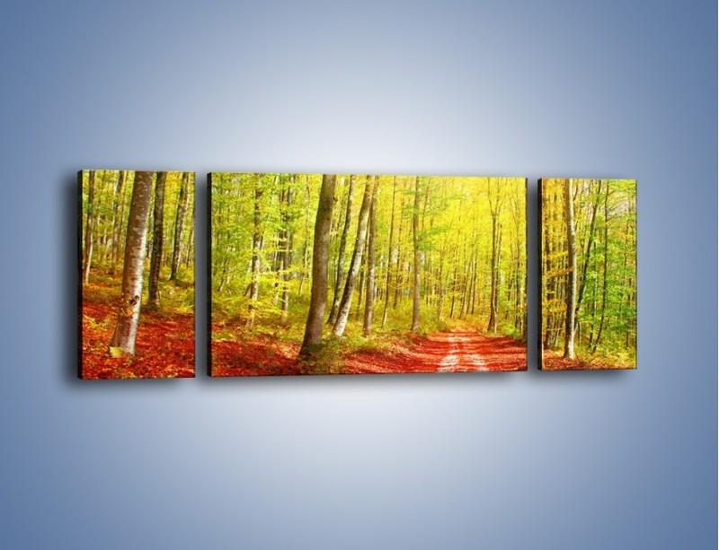 Obraz na płótnie – Brzózki liście i las – trzyczęściowy KN1345AW5