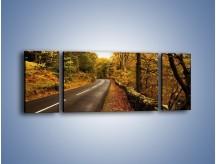Obraz na płótnie – Asfaltową droga przez las – trzyczęściowy KN169W5