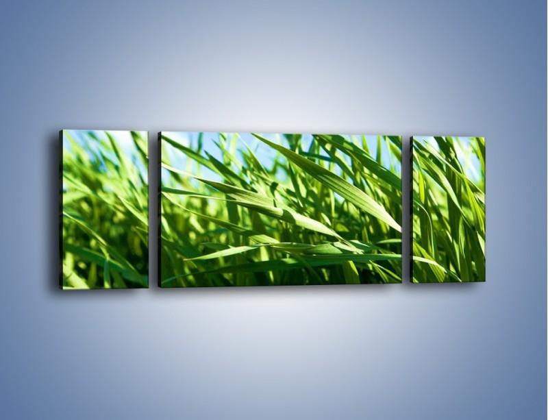 Obraz na płótnie – Wiatr w łodygach – trzyczęściowy KN176W5