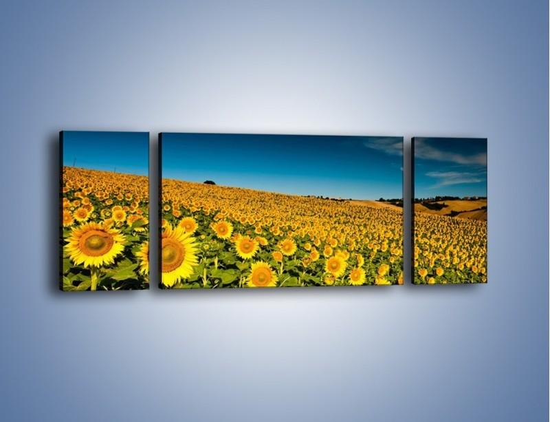 Obraz na płótnie – Słonecznikowe uśmiechnięte główki – trzyczęściowy KN205W5