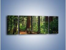 Obraz na płótnie – Chodźmy do lasu – trzyczęściowy KN611W5