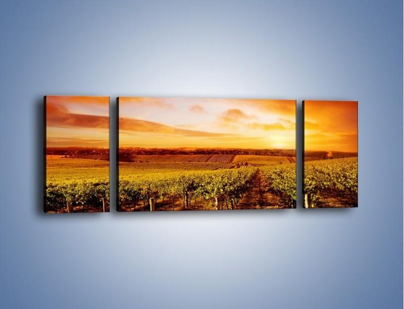 Obraz na płótnie – Ziemia i uprawy – trzyczęściowy KN673W5