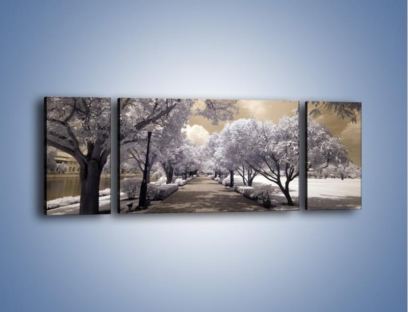 Obraz na płótnie – Parkowa aleja w sepii – trzyczęściowy KN734W5