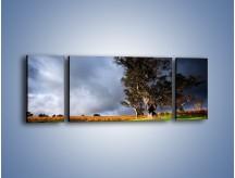 Obraz na płótnie – Burzowe chmury nad polaną – trzyczęściowy KN748W5