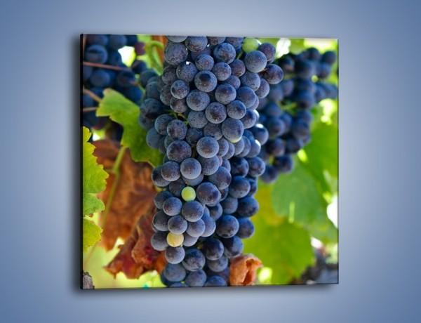 Obraz na płótnie – Wisząca kiść winogrona – jednoczęściowy kwadratowy JN071