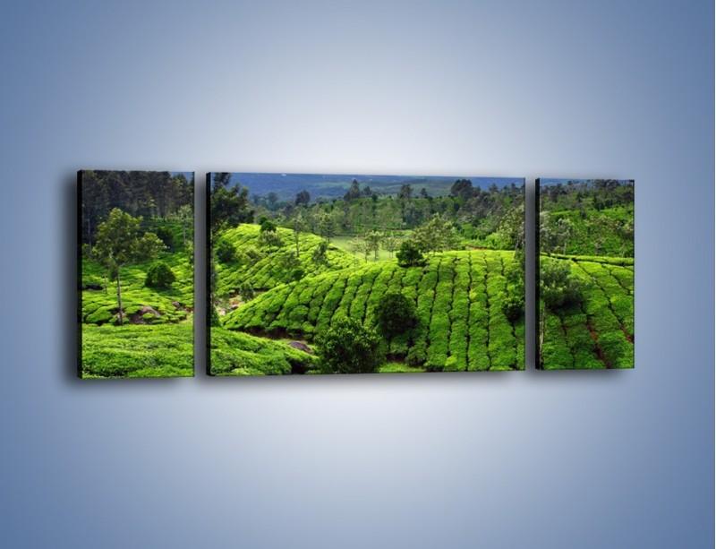 Obraz na płótnie – Rozległa zielona kraina – trzyczęściowy KN872W5