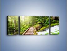 Obraz na płótnie – Bezpieczna droga przez las – trzyczęściowy KN922W5